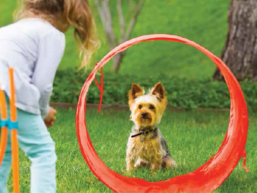 outdoor agility kit