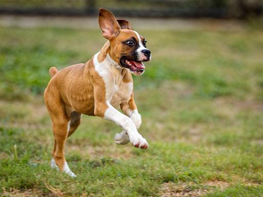 吠える犬 犬を注意する