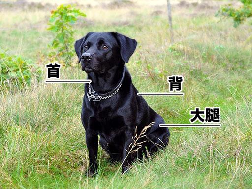 犬を注意する方法