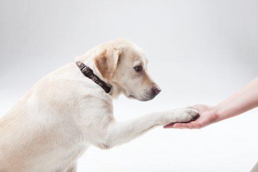 犬の芸としつけは違います。