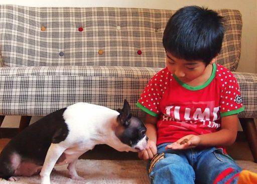 犬のしつけは子供でも出来ます。