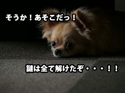 犬と宝探しゲーム