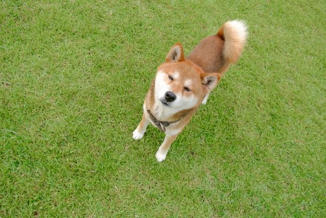 もしもペット保険に入っていなかったら、愛犬と離れなくてはいけなくなるかもしれません。