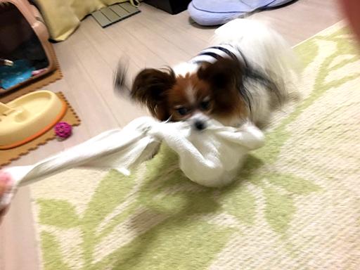 犬のおもちゃは自作である事を忘れないでください。メーカー品のような強度や安全性はありません。